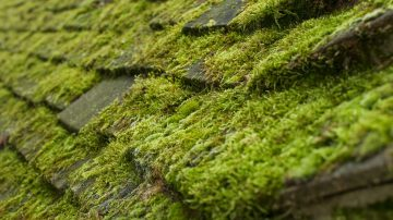 Moss Treatment